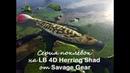 Серия поклёвок на LB 4D Herring Shad от Savage Gear