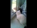 голубь издевается над котом