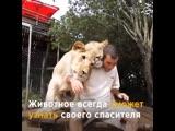 Любовь и благодарность диких животных. Женщина вырастила львят-сирот. Они встретились через 7 лет. Есть чему людям поучиться.