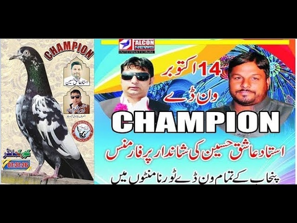 Best pigeons of Pakistan New champion high flying Pigeons . Секреты Чемпионов (Алексей Гуляев)