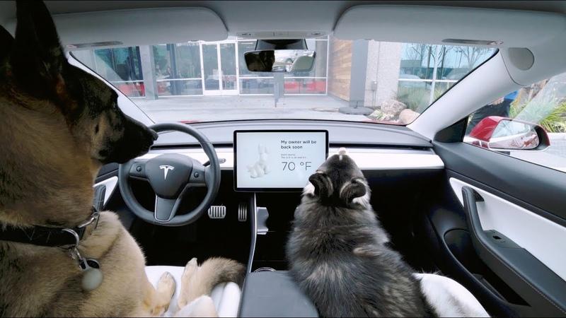 Tesla добавила режим для собак в электромобиле можно будет оставить питомцев одних NR