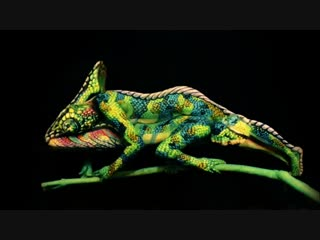 Look Again This Chameleon is Actually Two Painted Women