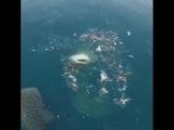 Have you ever seen such a beautiful sight Whale sharks feeding on baitfish at Mafia Island, Tanzania