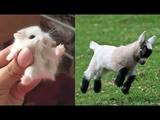 Cute baby animals Videos Compilation cute moment of the animals - Soo Cute! #70