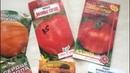 Сердечные томаты на моей грядке