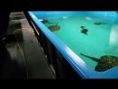 Аквариалка в 500 000 литров