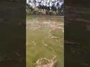 Balık dolu göle bir çuval yem atarsanız ne olur