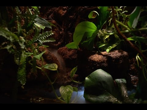 Paludarium - automated, realistic effects controlled by Raspberry Pi