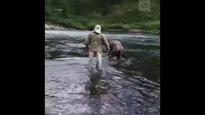 Шойгу в Туве поймал и выпустил в реку огромную рыбу