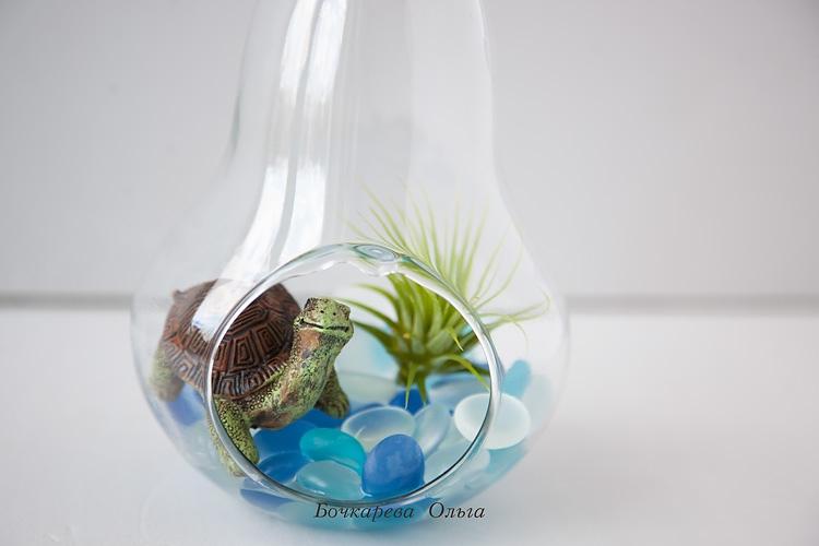 Атмосферные растения (тилландсия) 1rdM_asKyck