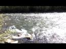 Река Муя