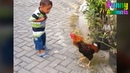Funny Roosters Chasing Kids! Funniest Animals Videos Compilation 2018