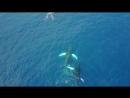 Whales in Las Galeras [Dominicana_Samana_Лас Галерас_Самана_Доминикана]