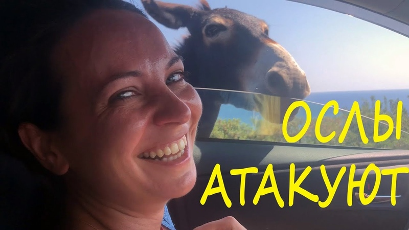 Девушка не ожидала встречи с ослом, сильно испугалась Girl didn't expect to see a donkey and scared!