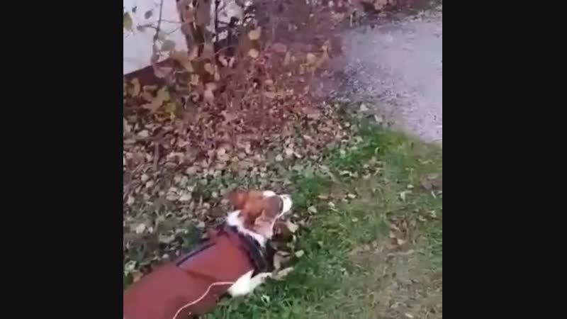 Луиза собачка с Бейского разреза
