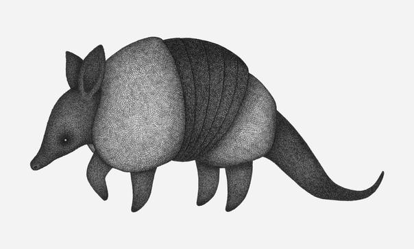 Иллюстрации животных из множества штрихов Иллюстратор Луис Коэльо