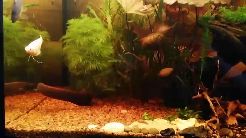 Фильм из цикла подводный мир в моём доме. 😉👍