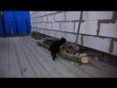 Коты ловят кайф (Лео и Пухендра)