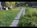 Прогулки с карди и пемами