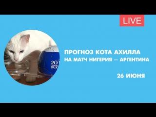 Прогноз кота Ахилла на матч Нигерия-Аргентина. Онлайн-трансляция