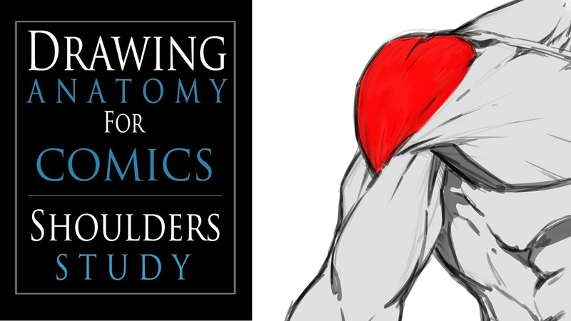 Drawing Anatomy for Comics - Shoulders Study
