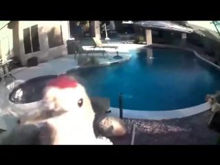 Дятел и камера видеонаблюдения