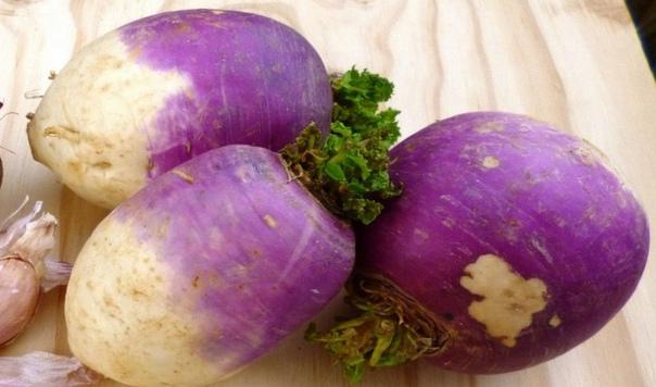 НЕ СКАЗКА ПРО РЕПКУ. До появления картофеля репа без всякого преувеличения была одним из основных овощей на столах народов всей Европы,и не только. С тех пор как картофель прочно занял