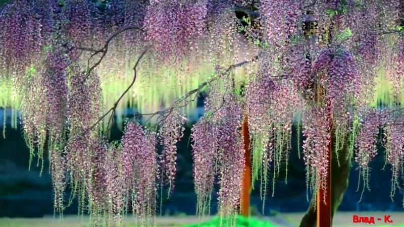 Японская мелодия и миллионы оттенков цвета