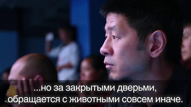 Китайские океанариумы фильм-расследование. Русские субтитры
