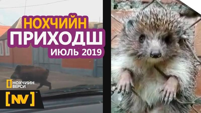 ЛУЧШИЕ ЧЕЧЕНСКИЕ ПРИКОЛЫ Июль 2019 ПРИХ 1