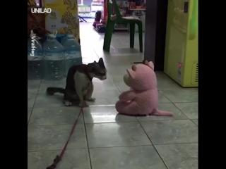Кот борец))