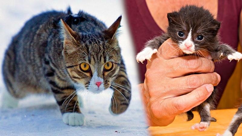 Удивительная история как кот Васька жизни спасал... На такое не каждый человек готов, а тут кот...