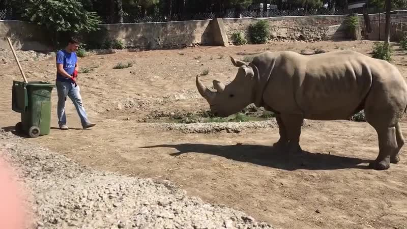 Man Vs Rhino.