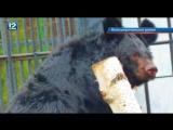Пополнение в Большереченском зоопарке