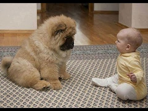 배꼽빠질 웃긴 강아지 영상 모음 ★ 세계에서 가장웃긴 강아지 영상ㅋㅋㅋ12619
