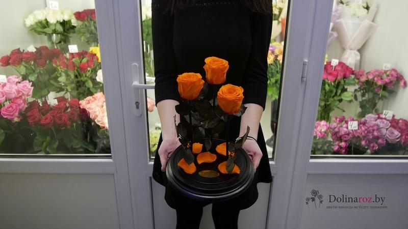 Как выглядит 3 розы в колбе? Купить вечную розу в колбе в Минске