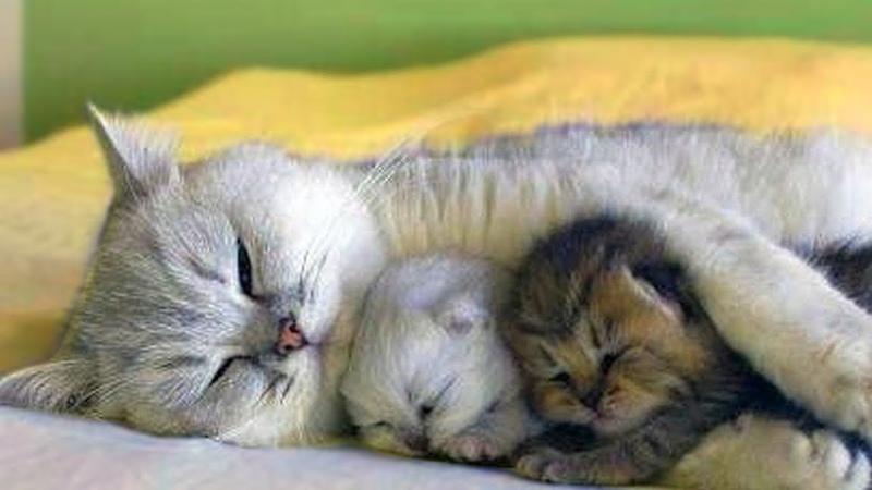 Мама и котеночки)