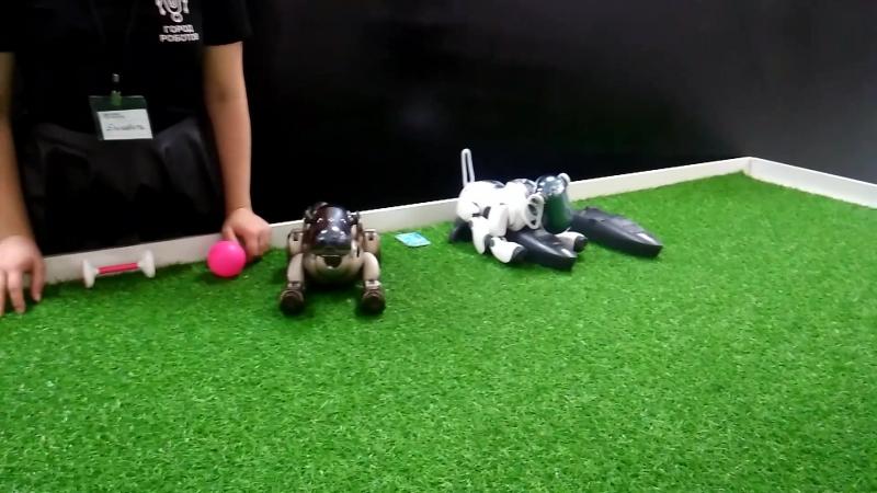 Город роботов. Собаки AIBO