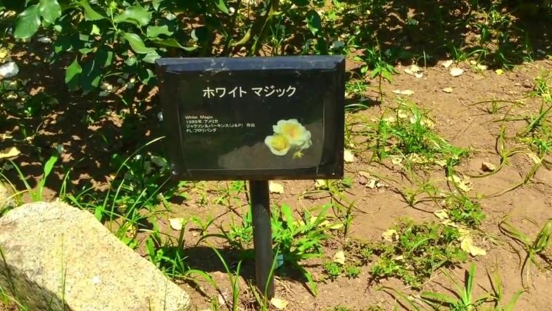 明治神宮原宿門散策してきました。2018 06 03 (1)