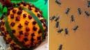Insekten und Mäuse werden deinem Haus nicht näher kommen, wenn du dies tust!