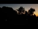 Турецкие куры петухи и другие птицы приветствуют рассвет