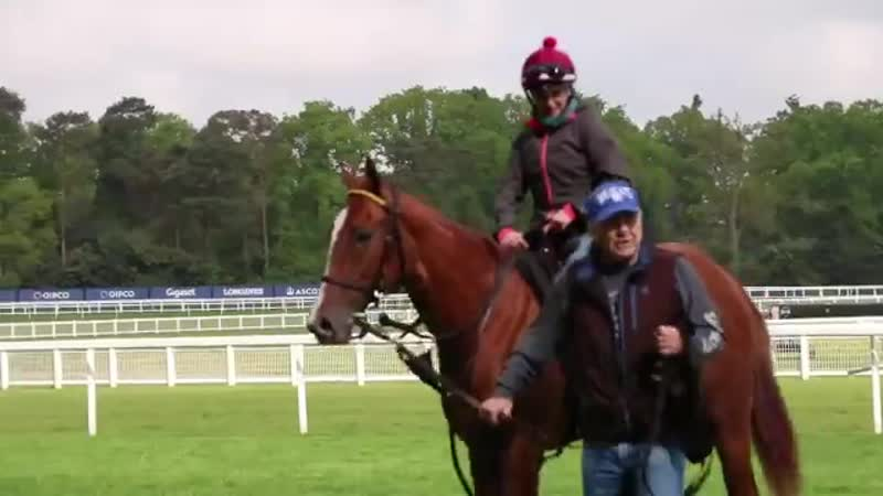 Look whos here - - Lady Pauline has been stretching her legs here at Ascot this morning...