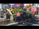 ШОК В сквере строителей срубили деревья