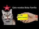 Notícias Rápidas Até Gato recebia Bolsa Família diz Bolsonaro