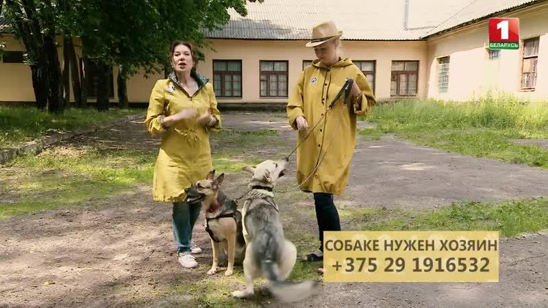 №16 Инструктор розыскной собаки Юрий Шапошников и его питомец. Герда и Юта ищут хозяев. Путь домой