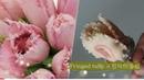 앙금플라워 프린지드튤립 Fringed tulip flower piping