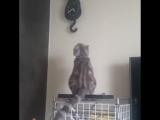 Котик гипнотизирует часы