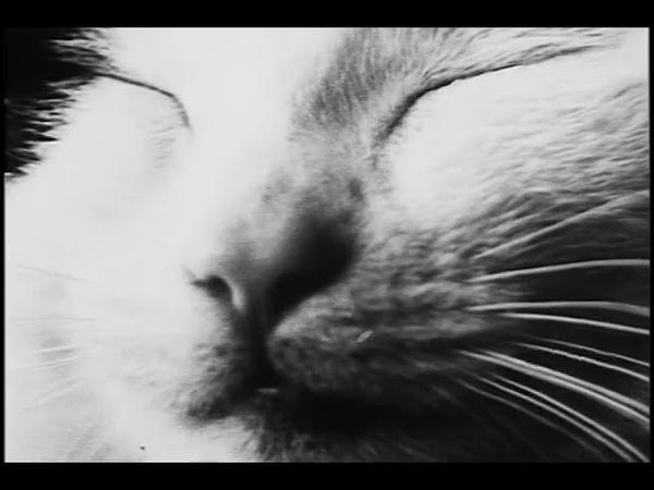 De PoesThe Cat (1968) Йохан ван дер Кёкен Johan van der Keuken