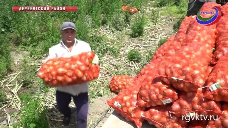 Садоводы Юждага планируют собрать более 20 тыс.тонн плодов