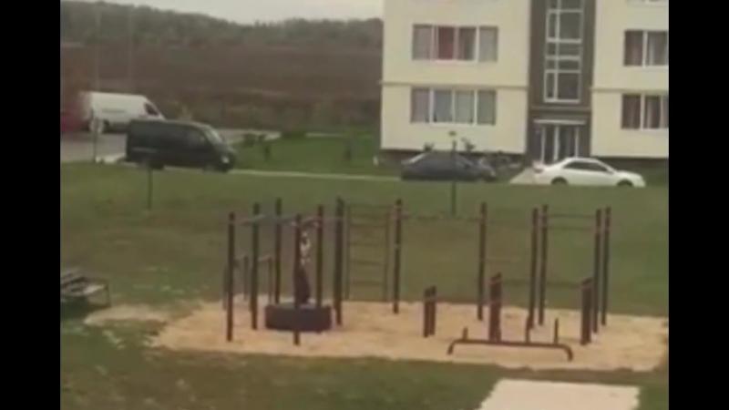 Ребенок подвесил собаку на поводке на игровой площадке